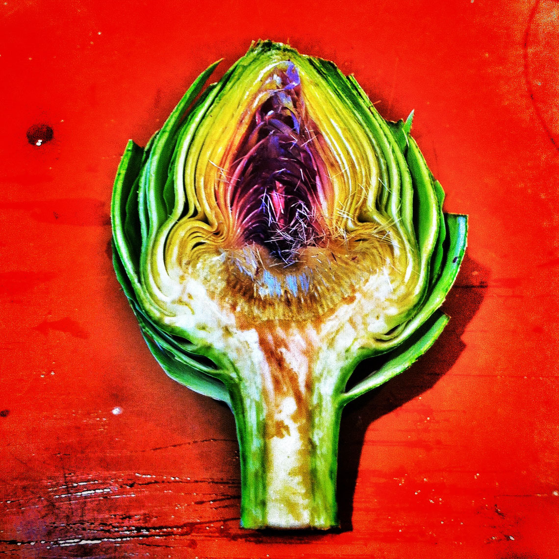 Cross Section of an Artichoke